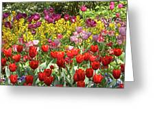 Tulips In St James's Park, London Greeting Card