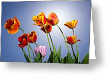 Tulips In Sun Light Greeting Card by Trevor Wintle