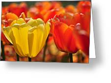 Tulips In The Midst Greeting Card