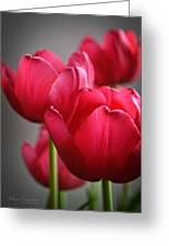 Tulips In The  Morning Light Greeting Card