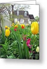 Tulips In Williamsburg Greeting Card