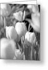 Tulips - Infrared 10 Greeting Card