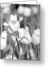 Tulips - Infrared 12 Greeting Card