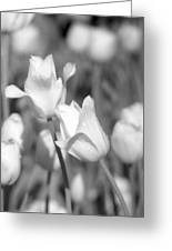Tulips - Infrared 13 Greeting Card