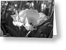 Tulips - Infrared 19 Greeting Card