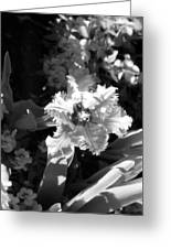 Tulips - Infrared 24 Greeting Card