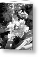 Tulips - Infrared 25 Greeting Card
