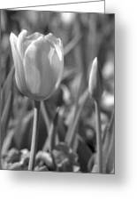 Tulips - Infrared 28 Greeting Card