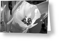 Tulips - Infrared 31 Greeting Card