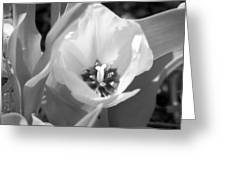 Tulips - Infrared 32 Greeting Card
