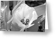 Tulips - Infrared 33 Greeting Card