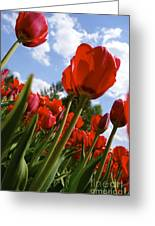 Tulips Leaning Tall Greeting Card