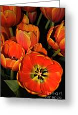 Tulips Of Fire Greeting Card