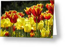 Tulips Of Germany Greeting Card