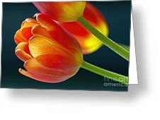 Tulips On Black 2a Greeting Card