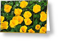 Tulips. Greeting Card