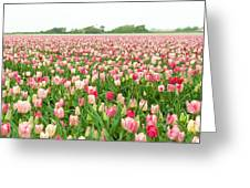 Tulips Part Xv Greeting Card