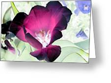Tulips - Perfect Love - Photopower 2042 Greeting Card