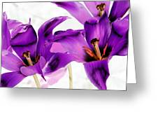Tulips - Perfect Love - Photopower 2081 Greeting Card