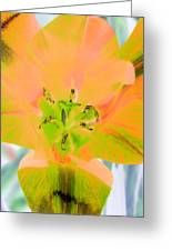 Tulips - Perfect Love - Photopower 2085 Greeting Card