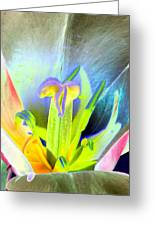 Tulips - Perfect Love - Photopower 2161 Greeting Card