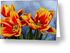 Tulips Radiance Greeting Card