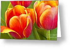 Tulips Red And Yellow Greeting Card