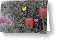 Tulips Reign Greeting Card