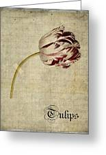 Tulips - S01bt2t Greeting Card