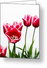 Tulips Say Hello Greeting Card