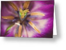 Tulips Star Greeting Card