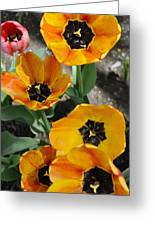 Tulips Tp Greeting Card