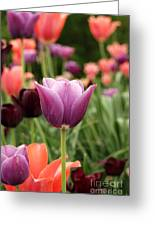 Tulips Welcome Spring Greeting Card
