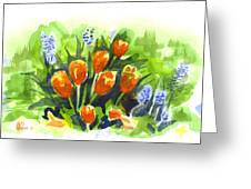 Tulips With Blue Grape Hyacinths Explosion Greeting Card