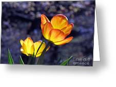 Tulips With Purple Bokeh Greeting Card