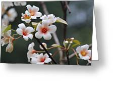 Tung Oil Blossoms Greeting Card