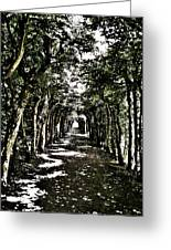 Tunnel Of Trees ... Greeting Card