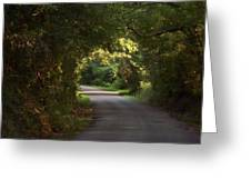 Tunnel Of Trees And Light Greeting Card