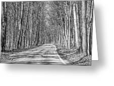 Tunnel Of Trees Black And White Greeting Card