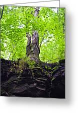 Tunnel Tree Greeting Card