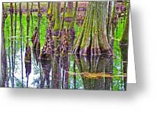 Tupelo/cypress Swamp Reflection At Mile 122 Of Natchez Trace Parkway-mississippi Greeting Card