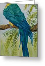 Turk Macaw Greeting Card