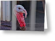 Turkey 1 Greeting Card
