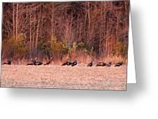 8964 - Turkey - Eastern Wild Turkey Greeting Card