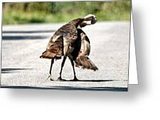 Turkey Fight Greeting Card