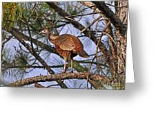 Turkey In A Tree Greeting Card