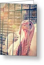 Turkey In The Cage Greeting Card