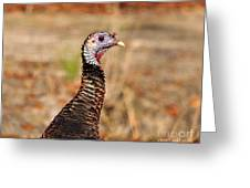 Turkey Profile Greeting Card