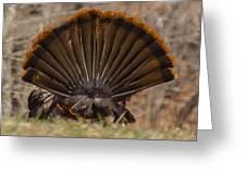Turkey Tail Greeting Card