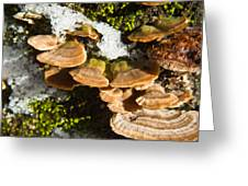 Turkey Tail Bracket Fungi Greeting Card